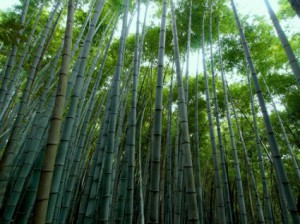 bamboo_forest_bamboo_green_217118
